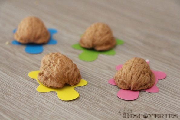 How to make turtles from nuts3