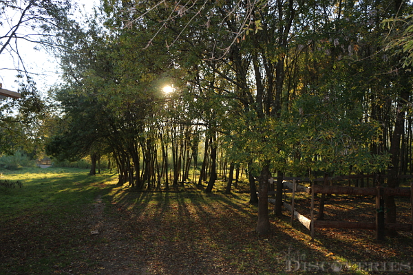 camp-trappeur-park-18